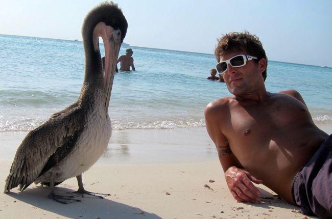 Pelican Pier, Aruba