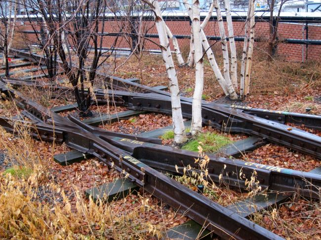 trees and tracks