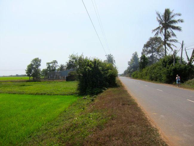Rice Paddie road