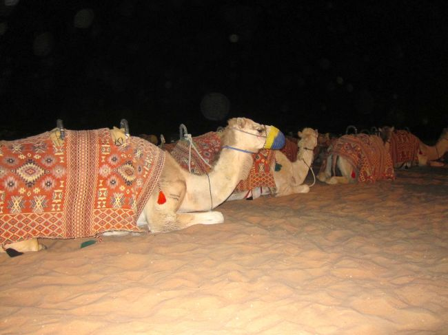 Camel Lot 2